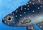ماهی مبتلا به سفیدک